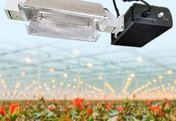 1000 Watt HPS MH Digital Dimmable Reflector Hood Indoor Greenhouses Hydroponic Industries Horticultural Plants Lighting System Kits 240V Grow Light