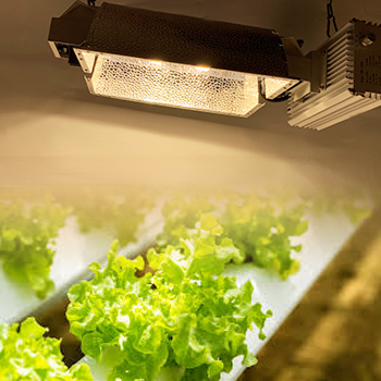 630W CMH Hydroponics Lettuce Indoor Plant Seeds Growing Lighting Fixture kit Dimming Double-Ended with Low-Frequency Ballast 120V-277V Grow Light