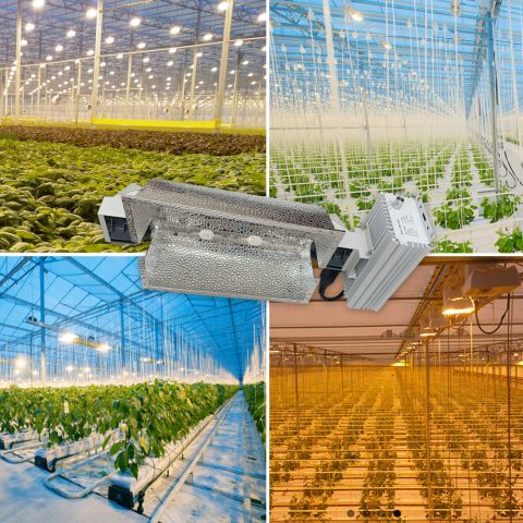 CMH 630w Ceramic Metal Halide Complete Lamp Fixture System for Greenhouse Plants and Medicine Cannabis Growth 347V Full Spectrum Grow Light 2