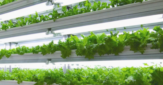 LED grow lights for hydroponic systems