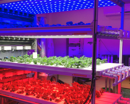 What is the effect of best led grow lights for hydroponics on plants